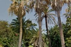 athena-parco