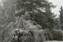 Y-inverno-1-FILEminimizer