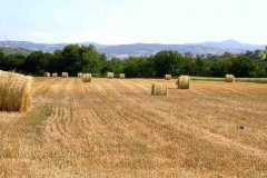 Agriturismo economico saturnia girasole terzuolo