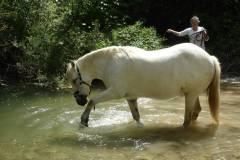 mila-in-the-river-750-750x563-30-750x563-70